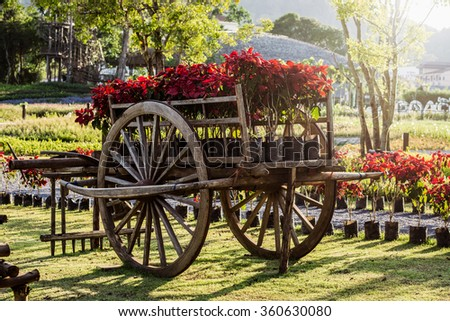 Ox cart with plant in the garden under sunlight
