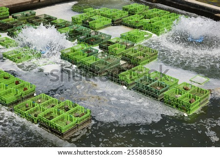 Oyster farms in the town of Yrseke in the province of Zeeland, the Netherlands - stock photo