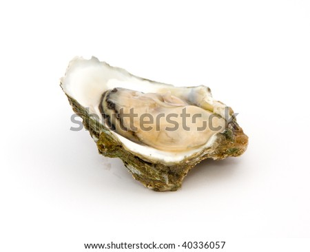 Oyster on a white background