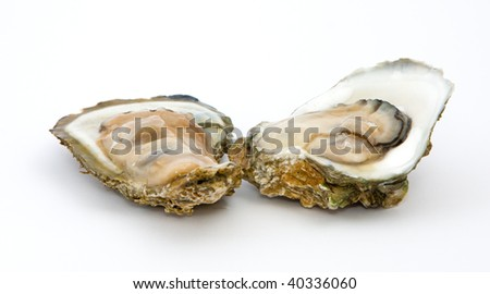 Oyster on a white background - stock photo