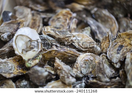 Oysters for sale at the seafood market - stock photo
