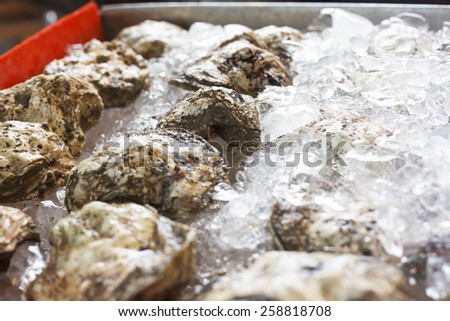 Oysters on ice in open buffet restaurant - stock photo