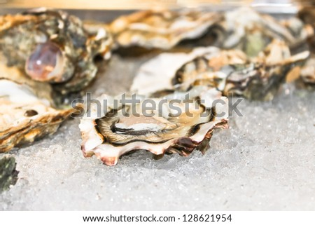 Oysters on ice in the fish restaurant - stock photo