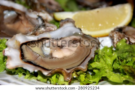 Oysters with fresh herbs and lemon - stock photo