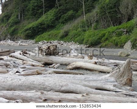 Pacific Driftwood - stock photo