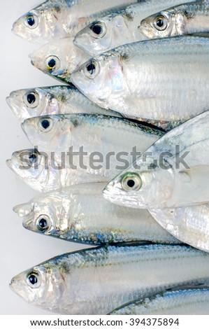 pacific fresh fish  - stock photo