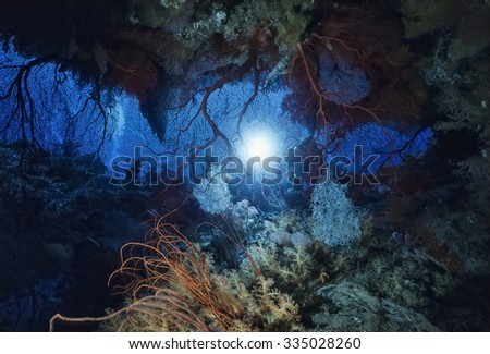 Pacific Ocean, Fiji Islands, U.W. photo, diver behind tropical sea fans and soft corals - FILM SCAN - stock photo