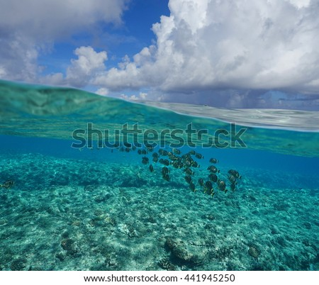Pacific ocean seascape, above and below water surface, sky with cloud and seabed on the fore reef with a shoal of fish underwater, Huahine island, French Polynesia