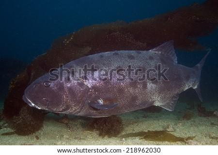 pacific ocean underwater animals  Pacific Ocean Underwater Fish