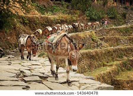 Pack Mules in the Himalayas - stock photo