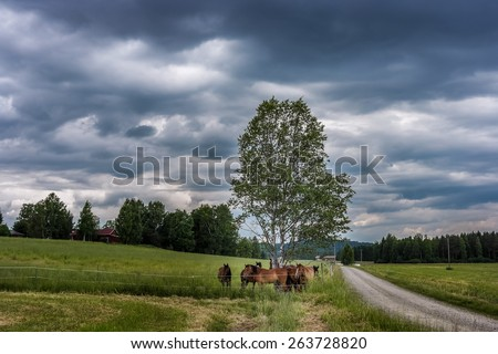 Pack of horses trying to find shelter from under the tree before storm comes. Finnish rural landscape.