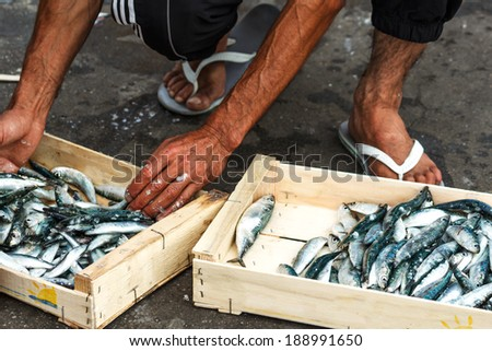 Packing of Anchovies