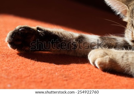 Pad of the cat lying on the carpet under sun - stock photo