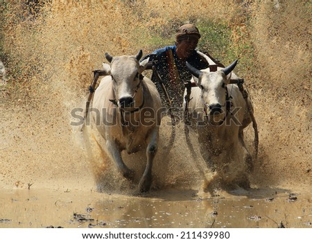 Animal Camel Harness Saddle Lies Resting Stock Photo