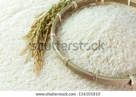 paddy and rice grain - stock photo