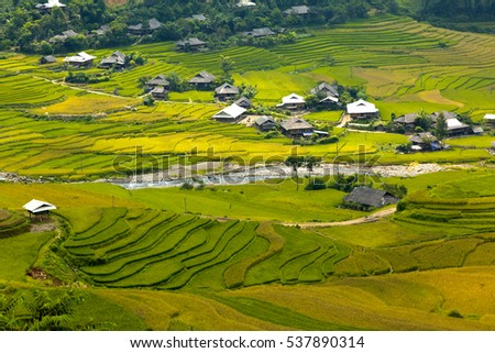 Paddy field plantation in the country of Vietnam.