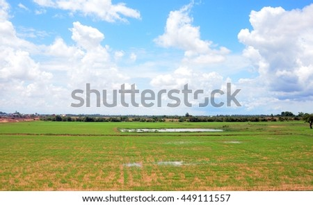 Paddy field with blue cloudy sky on background