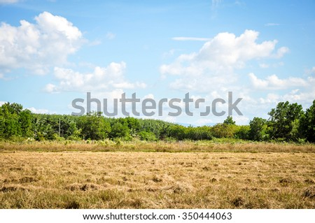 Paddy fields after harvest