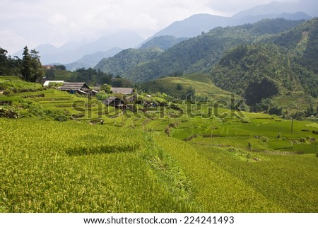 Paddy fields, village and a jungle in northern Vietnam