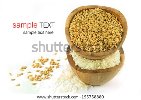 paddy rice and jusmine rice on white background - stock photo