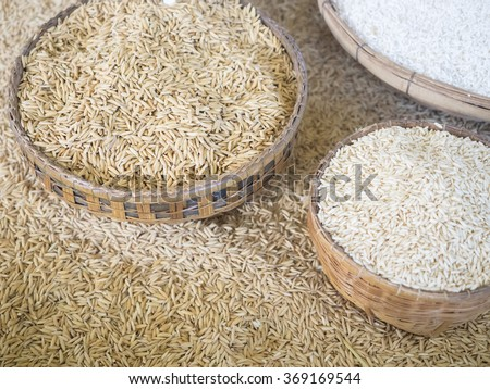 paddy rice and rice