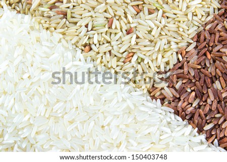 paddy rice,brown rice,white rice - stock photo