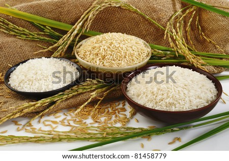 paddy rice,brown rice,white rice and japanese rice on sack background - stock photo