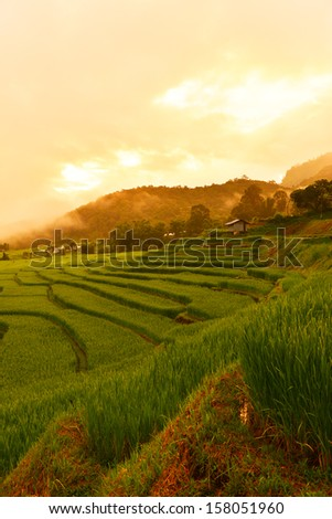 Paddy Rice Field at Sunrise