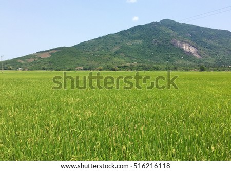 Paddy rice field with mountain background in Dong Thap province, Mekong Delta, southern Vietnam.