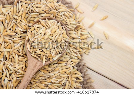 Paddy rice on wooden spoon with gunny sack. harvesting with rice farm.