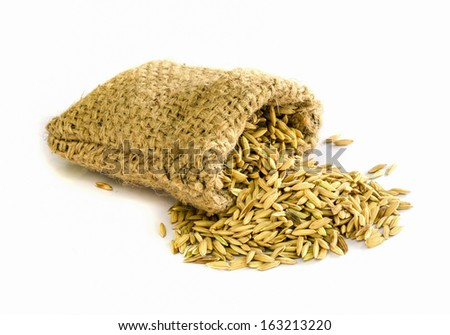 paddy rice seed in a  Burlap sack.
