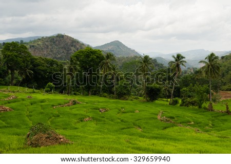 Paddyfileds in a rural hilly tropical landscape, Sri Lanka - stock photo
