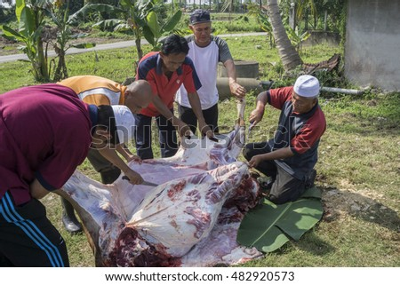 Pahang, Malaysia-September 12, 2016:Unidentified Malaysian Muslims help each other in halal slaughtering part of cows during Eid Al-Adha Al Mubarak, the Feast of Sacrifice or Qurban