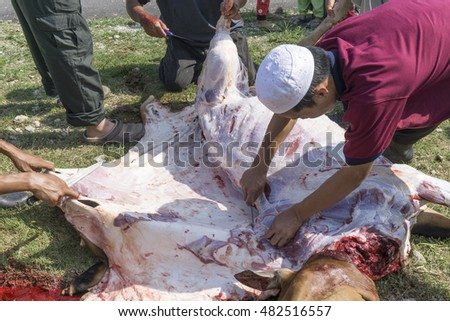 Pahang, Malaysia-September 12, 2016:Unidentified Malaysian Muslims help each other preparing in halal slaughtering part of cows during Eid Al-Adha Al Mubarak, the Feast of Sacrifice or Qurban