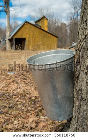 Pail used to collect sap of maple trees to produce maple syrup in Quebec, with a sugar shack in the background - stock photo
