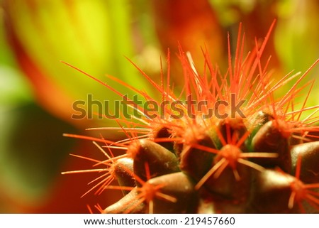 Pain concept, close up of red cactus spines - stock photo