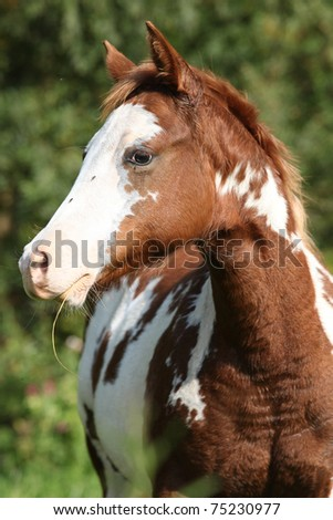 Paint horse - stock photo