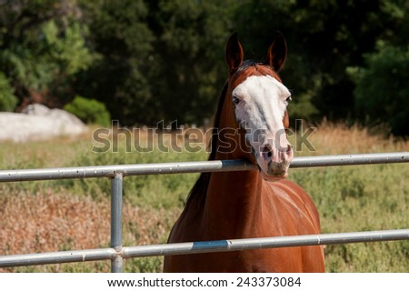 Paint Horse at Fence - stock photo