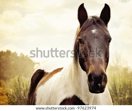 Paint Horse in Pasture - stock photo