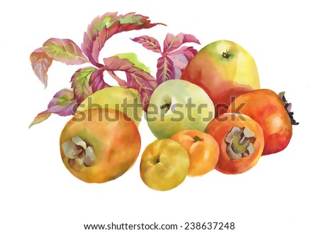 Painted autumn fruits and leaves on white background - stock photo