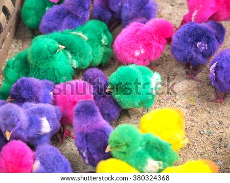 painted chicken on the asian market - stock photo