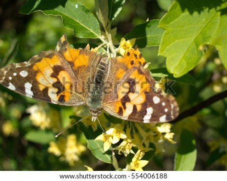 Painted lady butterfly warming its wings in the summer sun.