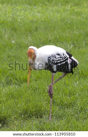painted stork bird - stock photo