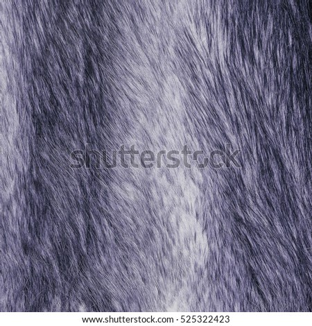 painted violet natural fur texture. Useful for background