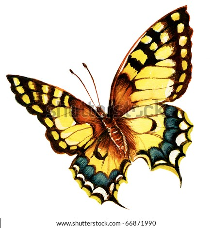 Painting of bright machaon butterfly over white background - stock photo