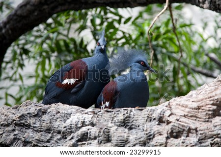 Pair of birds sitting on branch. - stock photo