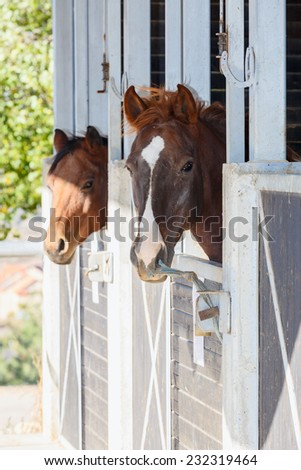 Pair of brown horses stand in a stable - stock photo