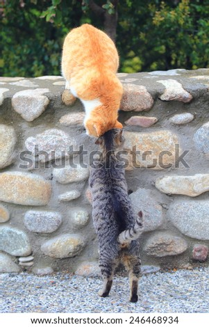 Pair of cats on a stone wall in Meteora, Greece - stock photo