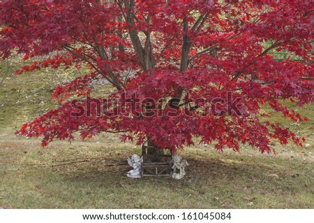 Pair of cherubic lawn ornaments arranged under a Japanese Maple tree in autumn.