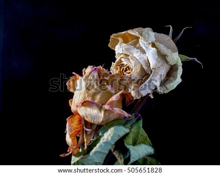 Pair of dry rose flowers in the dark